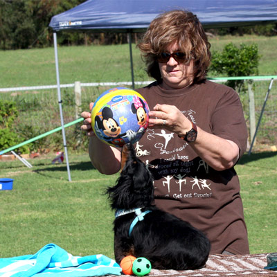 Marks Park Dog Training